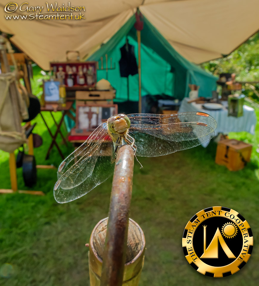 WG-Steam-Tent-Co-operative-Dragonfly-.jpg